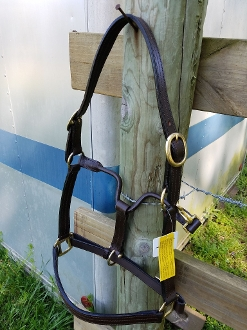 Horse size leather halter with brass hardware